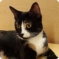 Adopt A Pet :: Macie - Mesa, AZ