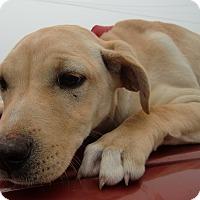 Adopt A Pet :: Daisy - Huntsville, AL