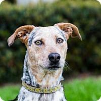 Adopt A Pet :: Zinnia - San Diego, CA