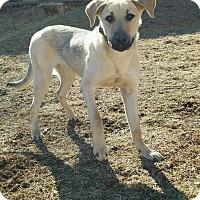 Adopt A Pet :: Chandler - New Oxford, PA