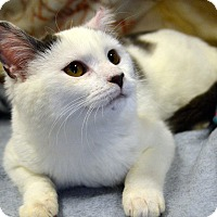 Adopt A Pet :: Curly Sue - Richmond, VA