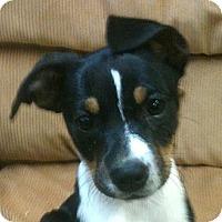 Adopt A Pet :: *Prissy - PENDING - Westport, CT