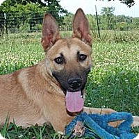 Adopt A Pet :: Elvis--Reduced fee $300 - Spring Valley, NY