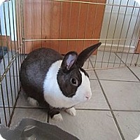 Adopt A Pet :: Fender - Sterling Hgts, MI