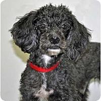 Adopt A Pet :: Nike - Port Washington, NY