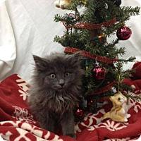 Adopt A Pet :: Raoul - Fairborn, OH