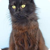 Adopt A Pet :: Shady 150082 - Atlanta, GA