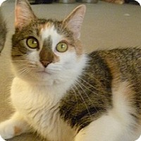 Adopt A Pet :: Melinda - Hamburg, NY