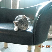 Adopt A Pet :: Paisley - Riverside, RI