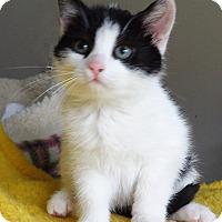 Adopt A Pet :: Rosie - N. Billerica, MA