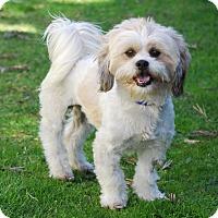Adopt A Pet :: GULLIVER - Los Angeles, CA