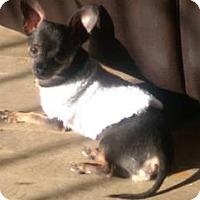 Adopt A Pet :: CJ 2 Years - C/S & Denver Metro, CO