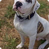 Adopt A Pet :: Chuck (ETAA)(Reduced Fee) - Allentown, PA