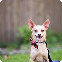 Adopt A Pet :: Rodrigo - Little Rock, AR
