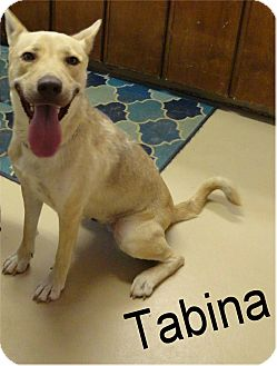 Shepherd (Unknown Type)/Labrador Retriever Mix Dog for adoption in Ozark, Alabama - Tabina