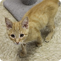 Adopt A Pet :: Nugget - Medina, OH