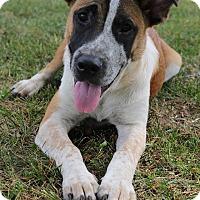 Adopt A Pet :: BH Bosley - Glastonbury, CT