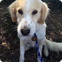 Adopt A Pet :: Jasper - San Diego, CA