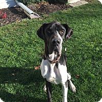 Adopt A Pet :: Thunder - Oswego, IL