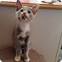 Adopt A Pet :: Winkin' - Tampa, FL