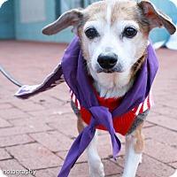 Adopt A Pet :: Ethel - Washington, DC