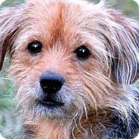 Adopt A Pet :: AYDEN(ADORABLE