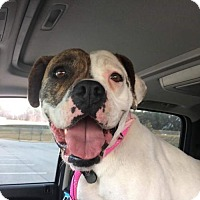 Adopt A Pet :: Bella - Jacksonville, AL