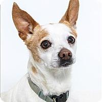 Adopt A Pet :: Mr. Barclay - San Luis Obispo, CA