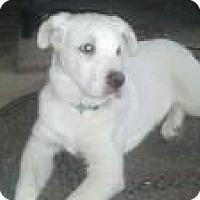 Adopt A Pet :: Gunner - Westfield, MA
