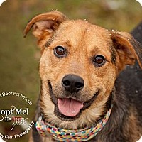Adopt A Pet :: Nellie - Medina, OH
