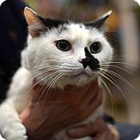 Adopt A Pet :: Tinymew - Brooklyn, NY