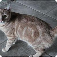 Adopt A Pet :: Honeymum - Duncan, BC