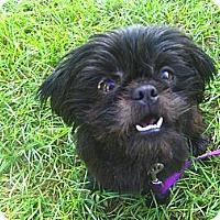 Adopt A Pet :: Cinder - Orange Park, FL