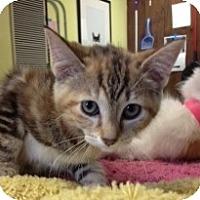 Adopt A Pet :: Ember - Byron Center, MI