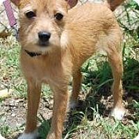 Adopt A Pet :: Hildy - Bradenton, FL