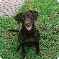 Adopt A Pet :: Maddie - Bowie, MD