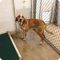 Hound (Unknown Type) Mix Dog for adoption in Winchester, Virginia - Rusty
