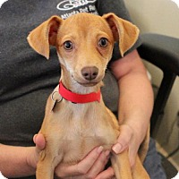 Adopt A Pet :: Jules - Atlanta, GA