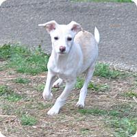 Adopt A Pet :: J.T - Tumwater, WA