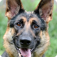 Adopt A Pet :: Misha - Wayland, MA
