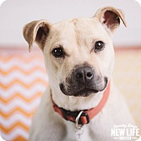 Adopt A Pet :: Nola - Portland, OR