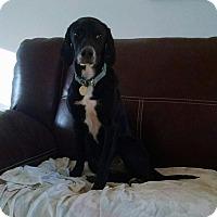 Adopt A Pet :: Chevy - Richmond, VA