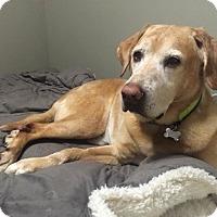 Adopt A Pet :: Moe - Detroit, MI