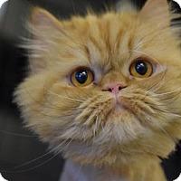 Adopt A Pet :: Tigger - DFW Metroplex, TX