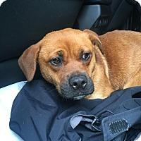 Adopt A Pet :: Jill - sanford, NC