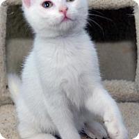 Adopt A Pet :: Liz - Potomac, MD
