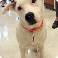 Adopt A Pet :: Case in CT - Manchester, CT