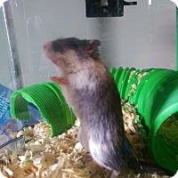 Adopt A Pet :: Speedy - Edmonton, AB