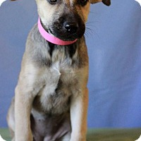 Adopt A Pet :: Bailey # 5223 - Waldorf, MD