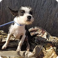 Terrier (Unknown Type, Medium) Mix Puppy for adoption in New Milford, Connecticut - Ashton